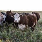 De verborgen kosten van vlees