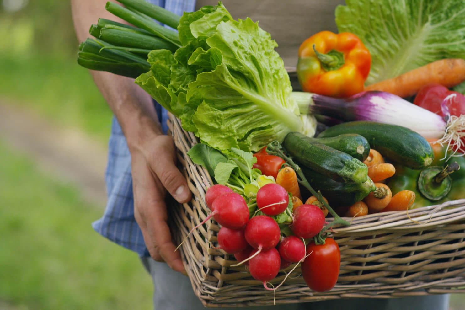 Groente: de bouwstenen voor jouw vegetarische maaltijd