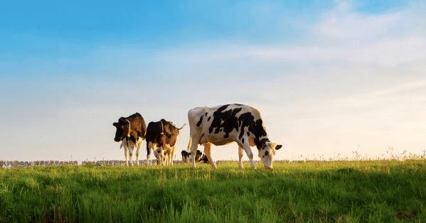 Eerlijke vleesprijs leidt tot meer balans